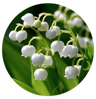 Lily of the Valley & Sage Essential Oils Refill